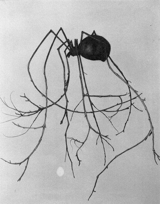 wooden_leg_spider